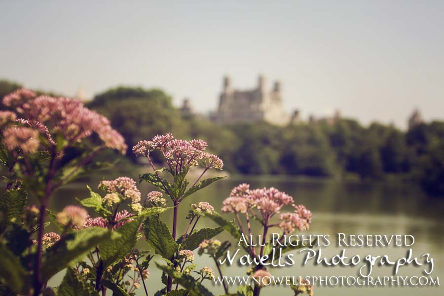 Central Park Flowers Lake Pond New York, Manhattan, Real New York Tour, Photography by Noelle Wells, Nowells Photography, All Rights Reserved