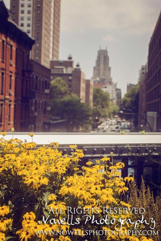 Chelsea High Line in New York City - Architecture and Nature of NYC - Photography by Noelle Wells, www.nowellsphotography.com