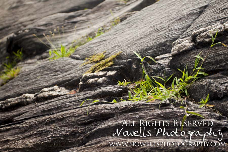 Schist New York, Manhattan, Real New York Tour, Photography by Noelle Wells, Nowells Photography, All Rights Reserved