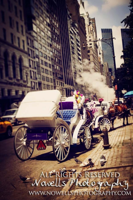 Horse Carriage pigeons New York, Manhattan, Real New York Tour, Photography by Noelle Wells, Nowells Photography, All Rights Reserved
